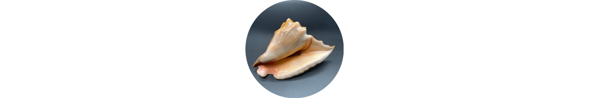Gastéropodes